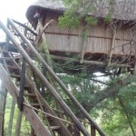 Treehouse 5 exterior