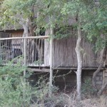 Treehouse 8 exterior