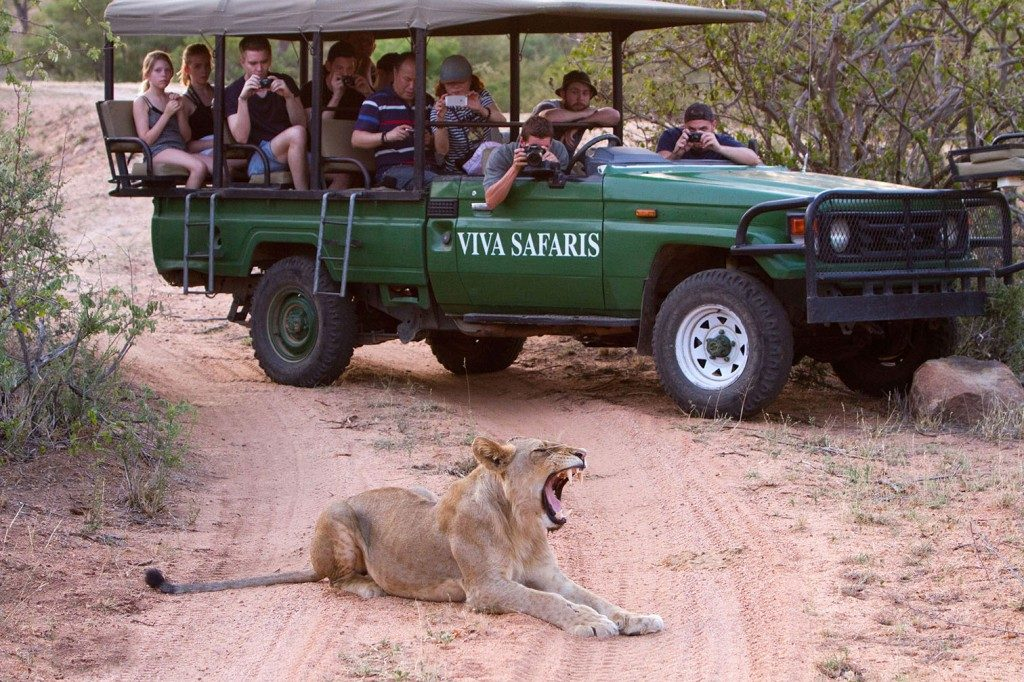 Get up close to the Big 5 in Kruger National Park safari in one of our open game viewers!