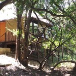Treehouse 6 exterior