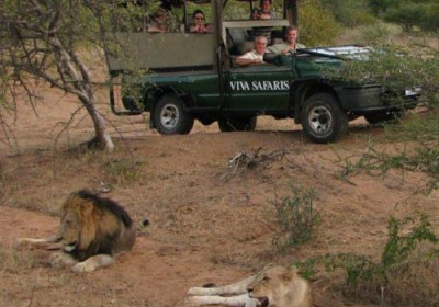 Lions spotted on gamedrive in Kruger National Park