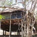 Treehouse 3 exterior
