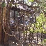 Treehouse 6 exterior