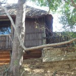 Treehouse 7 exterior