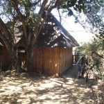 Treehouse 8 exterior
