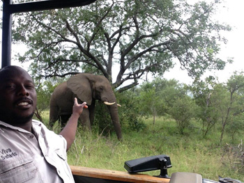 Bongani and nearby elephant during Sunset Drive
