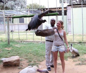 Interaction with rehabilitated Vulture at Moholoholo