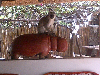 Monkey business at Tremisana Lodge