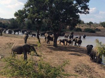 Elephant herd at Kumana Dam.