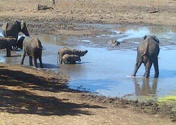 Elephants at Kumana Dam