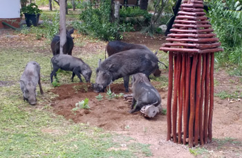 Fabulous lawnmowers in action at Tremisana Lodge.