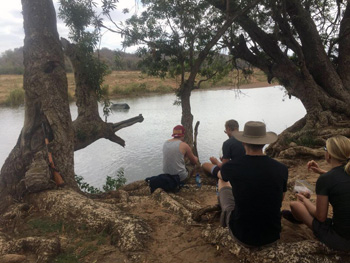 Guests enjoy the tranquillity of the Olifants River while on walk. Hippo obliges.
