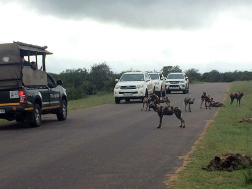 Patrick and lucky guests near Wild Dogs.