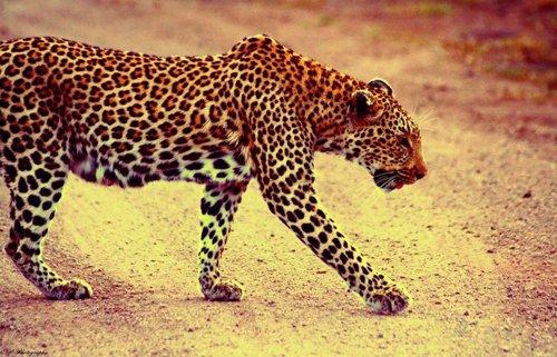 Brilliant close up shot of leopard.