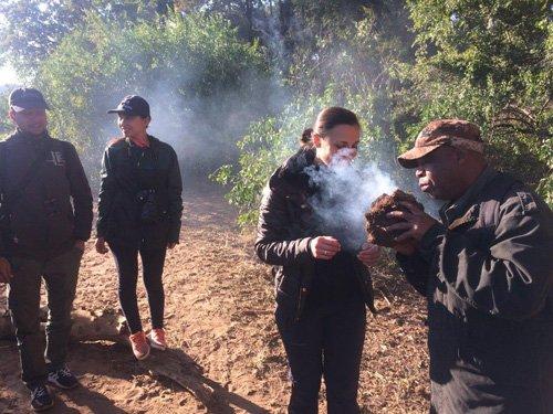 Rex smoking elephant dung