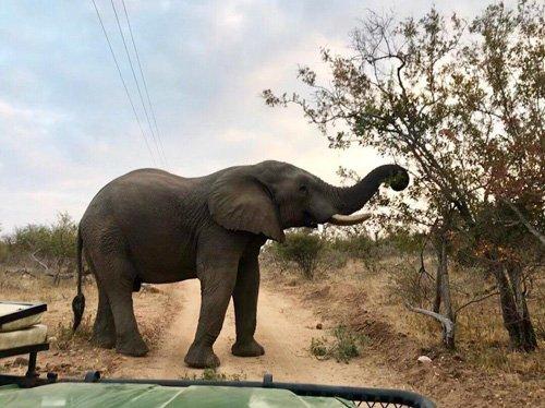 Elephant nice and close