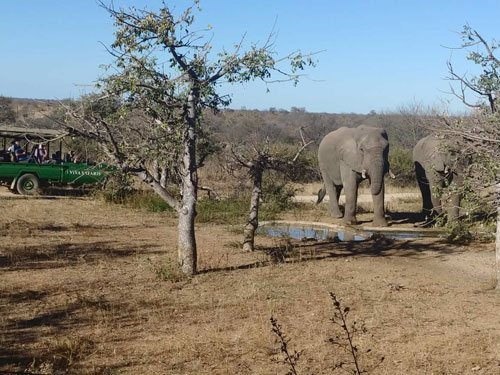 Guests looking at Elephant dinking from waterhole in front of Lapa.