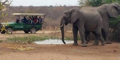 Elephants at waterhole in front of Tremisana Lapa.