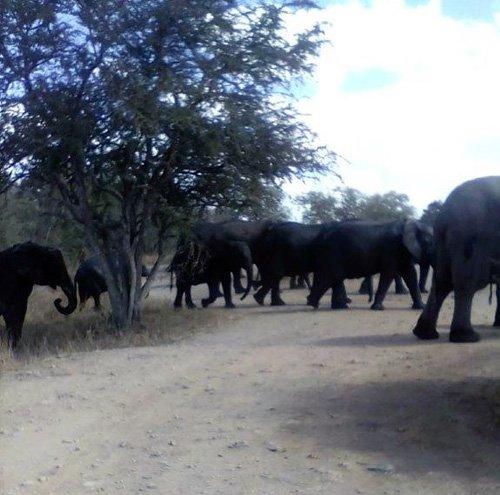 Elephants near Tremisana Lodge.