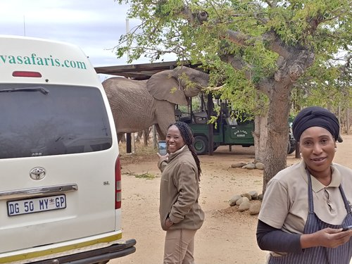 Elephant in Tremisana car park just as tourists arrive. Delina and Pretty and Old Lady Gogo in the background.