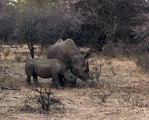 Black Rhino on Motlala.