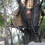 Treehouse 2 exterior