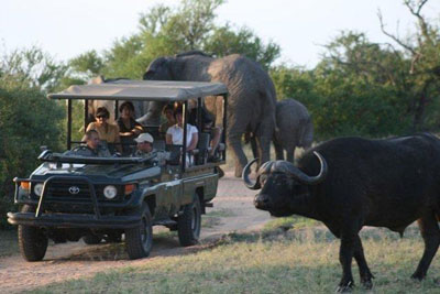 Outstanding game viewing at Tshukudu