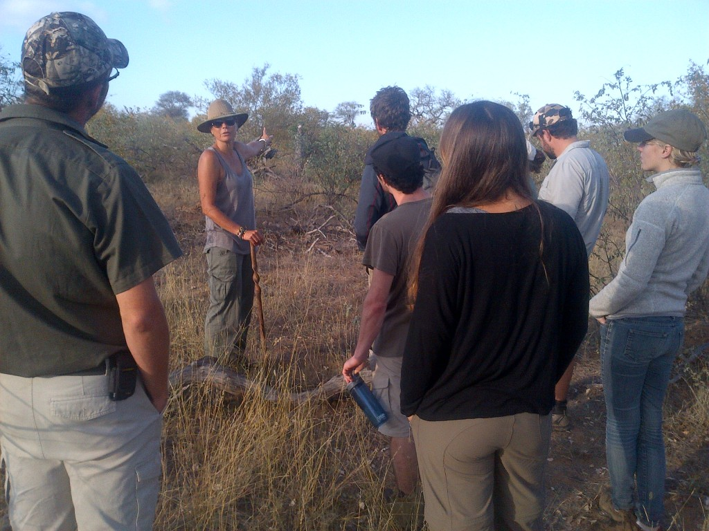 Guests being shown wildlife during bush walk on safaris to Kruger Park