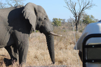 Our open Gameviewer close up to an elephant