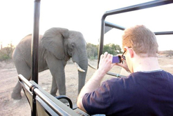 Guest takes a brilliant photo of close-up elephant