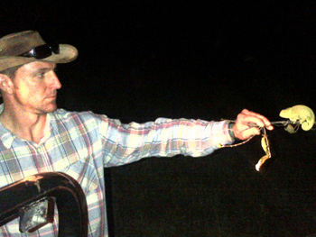 Alistair showing flap-necked chameleon to clients