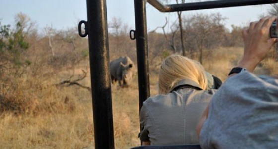 Rhino spotted on Kruger Park gamedrive