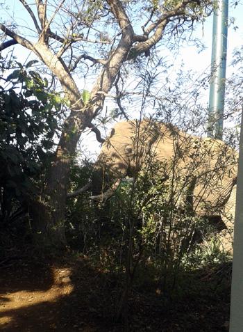 Elephant in camp – testing Nyarai's nerves !
