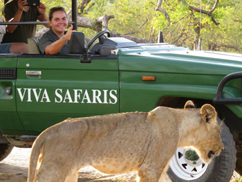 Tanya and guests close-up to lioness.