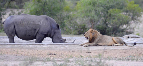 Great photo of 2 of the Big 5 at a waterhole