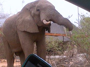 Elephant at Tremisana Lodge.
