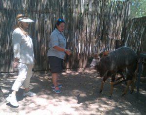 Patti and Sandra near Nyala bull in the Boma area.