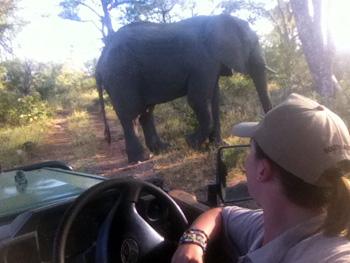 Close up of elephant.