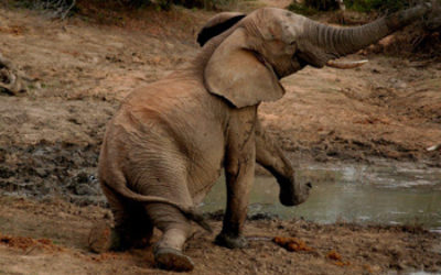 Elephant antics at the Waterhole.