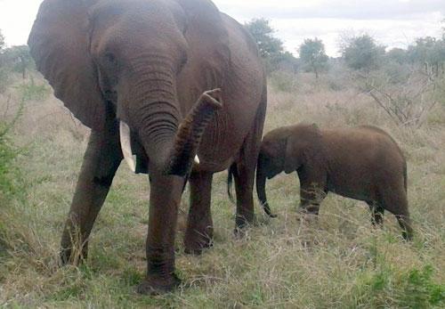 Great shot of Elephants.