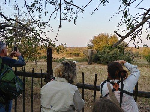 Guests at Lapa snap shot of elephant