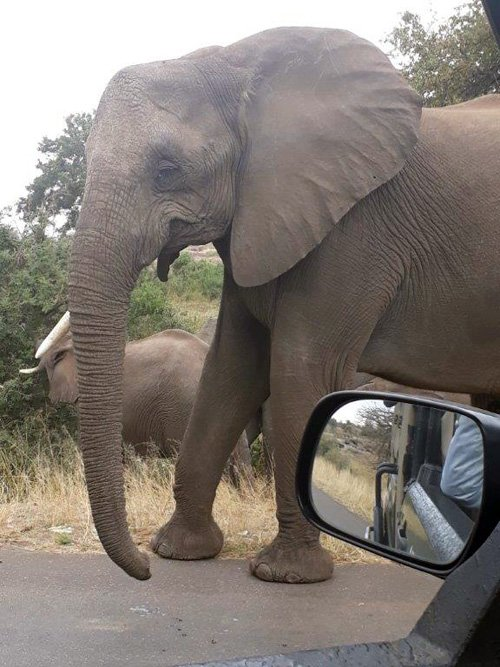 Close up of Elephants