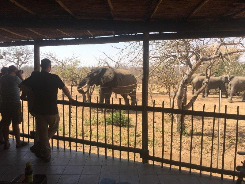 Elephants greeting guests at Tremisana