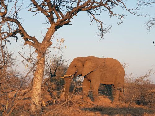 Elephant seen on Bush Walk.