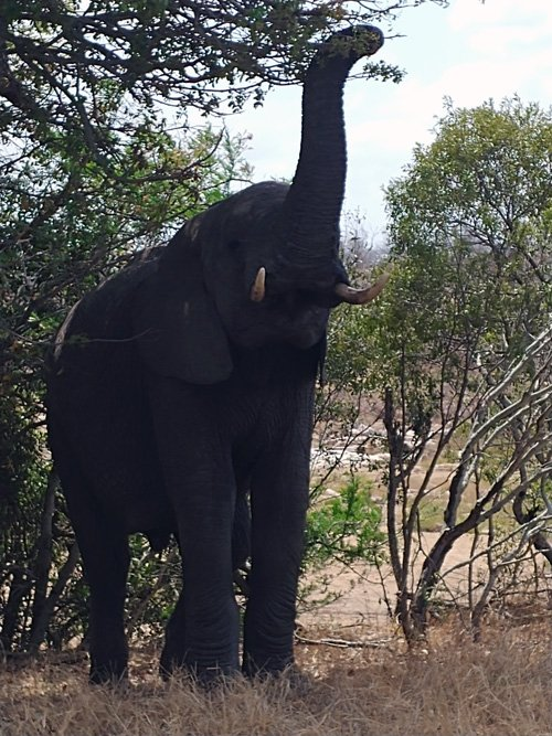 Great shot of elephant.