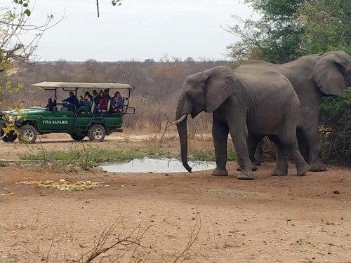 Elephants at waterhole in front of Tremisana Lapa.