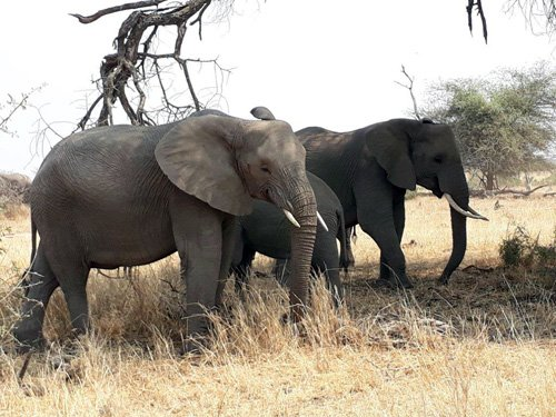 Elephants are being seen in their hundreds in Kruger Park.
