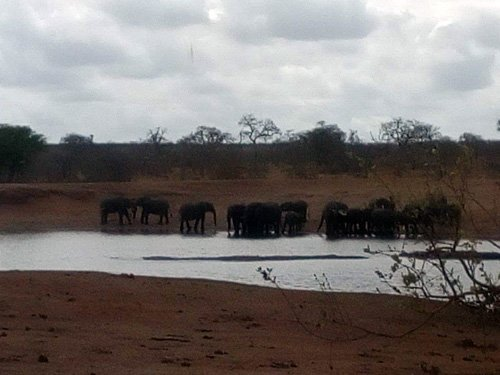 Elephant herd at Ximangwaneni Dam.