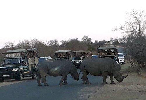 Viva Safaris' Patrick in pole position.