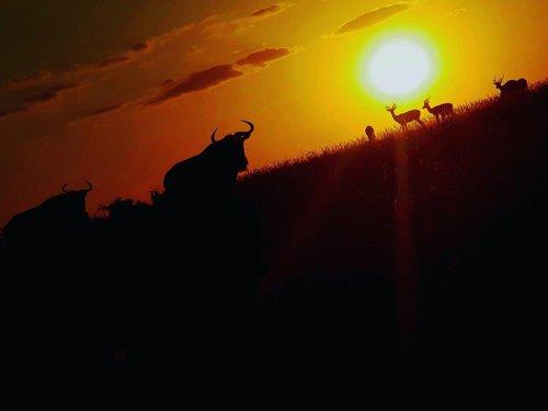 Beautiful Sunset Silhouettes